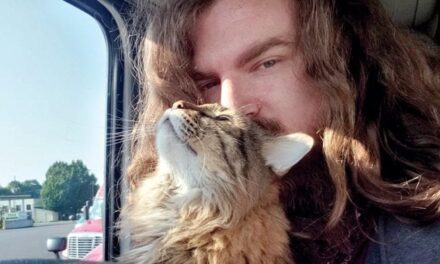 The cat in the truck: Feline friend brings comfort and companion to driver while driving OTR